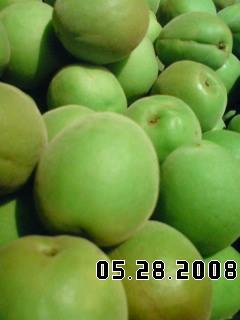 ウメッシュ2008