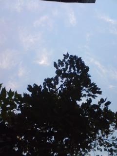 雲のごとく